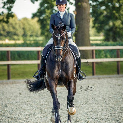 lauradijkslagfotografie paardenfotografie