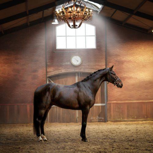 lauradijkslagfotografie heerde paardenfotografie