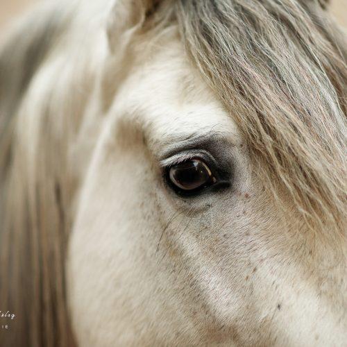 lauradijkslagfotografie paardenfotograaf detail heerde
