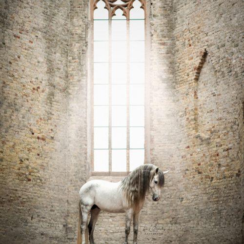lauradijkslagfotografie paardenfotograaf heerde andalusier