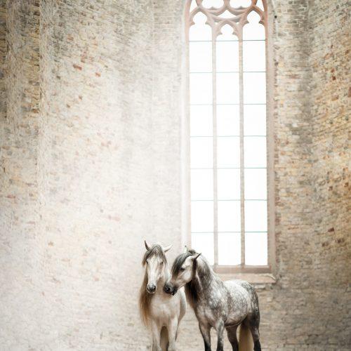 paardenfotografie lauradijkslagfotografie spaanse hengsten heerde