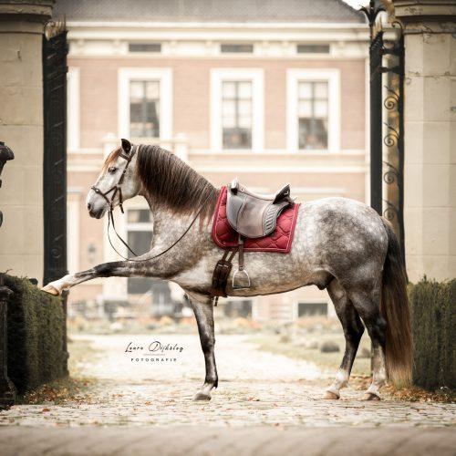 lauradijkslagfotografie paardenfotograaf heerde themashoots