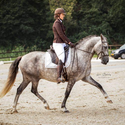 laura dijkslag fotografie paardenfotograaf heerde
